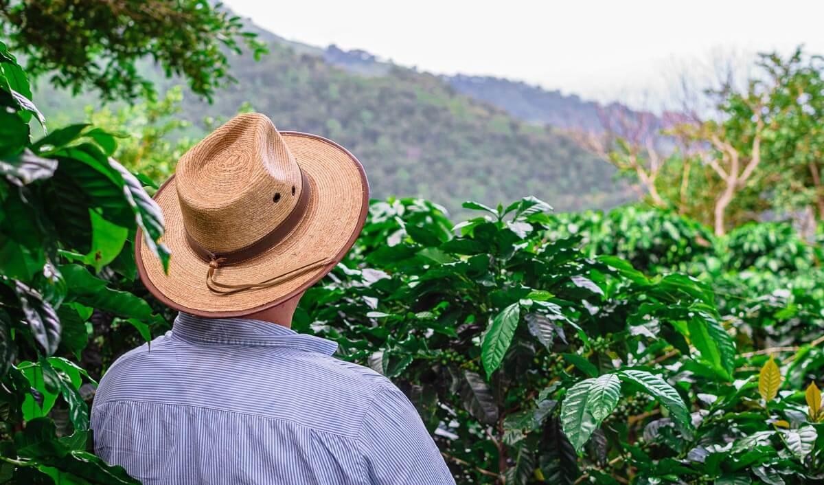 Während die Robusta auch in flachen Lagen gedeiht, wächst die Arabica Bohne nur in hohen Lagen.