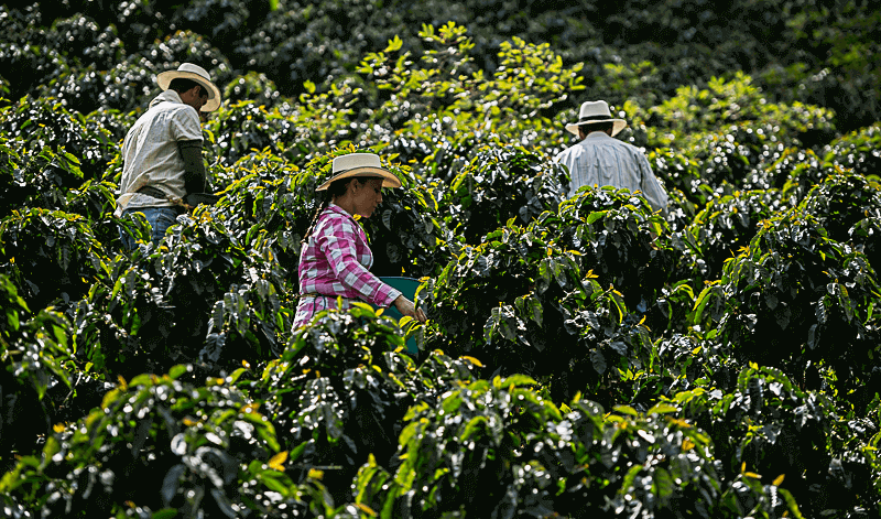 Copuro Organic Coffee