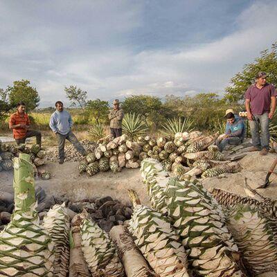 Mezcal Produzenten mit Agaven
