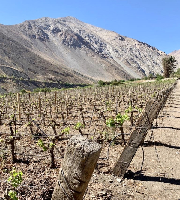 Pisco ist ein Weinbrand, weswegen der Weinanbau natürlich eine zentrale Rolle für den Geschmack und die Qualität des Pisco spielt